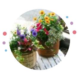 オススメの花