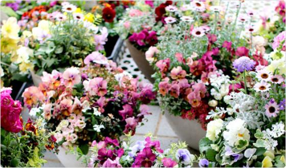「ギャザリング」の花寄せ植え作品の通販